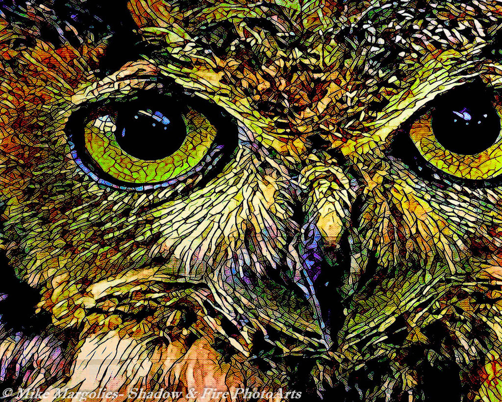 Owl of Transformation
